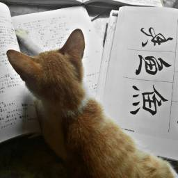remixit cat book studylanguage studytime studyhard neko learninglanguage remix language japanlanguage japan belajarbahasajepang jepang bahasajepang animal animals pets freetoedit