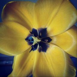 whatilove frommygarden flower beauty photography