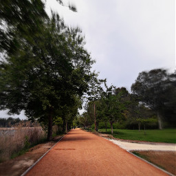 tree yol instagram photography picsart scsnails pclonghairdon'tcare pclonghairdon