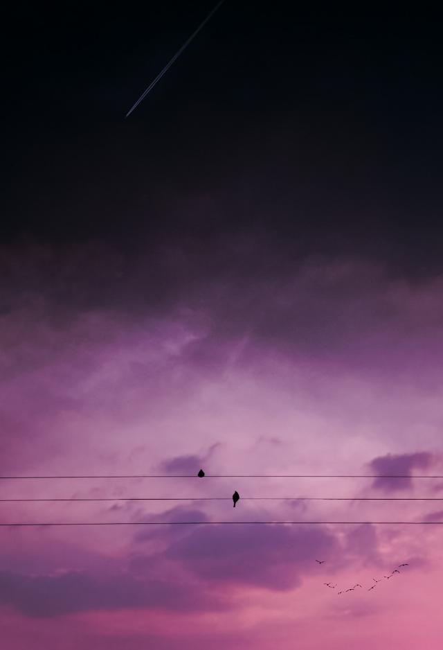 #freetoedit #sunset #madewithpicsart #birds #sky #pink @picsart