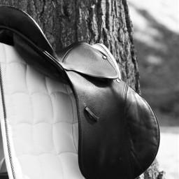 horseequipment love blackandwhite horse canoneos1000d