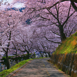 photography pathway springflowers. freetoedit japan