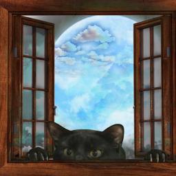 freetoedit dailychallenge blackcat window sky srcablackcatforfridaythe13th