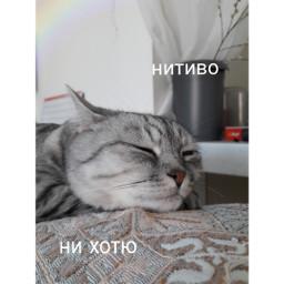 милота😍 cat freetoedit милота