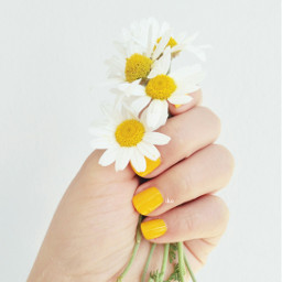 spring yellownails