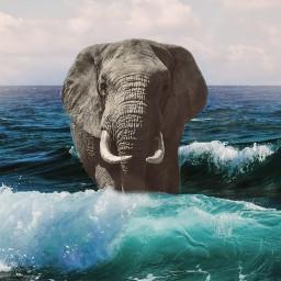 freetoedit elephant elephantday 미술 arte ircelephants