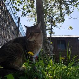 freetoedit mycat photoshooting garden bestcat
