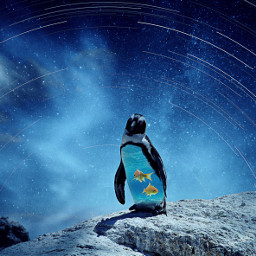 freetoedit pinguin underwater goldfish fisg