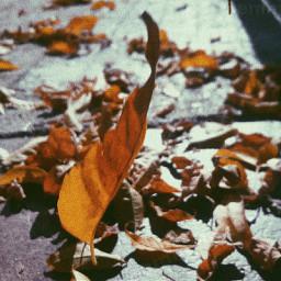 freetoedit autumn tumblr wallpaper myphoto