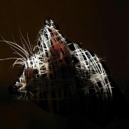 freetoedit cat eraser black drawing