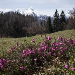 nature landscape flowers germany spring