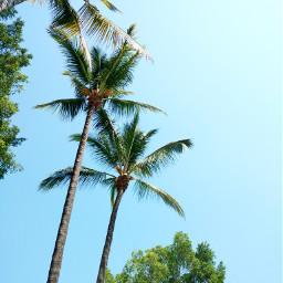 palms sky trees