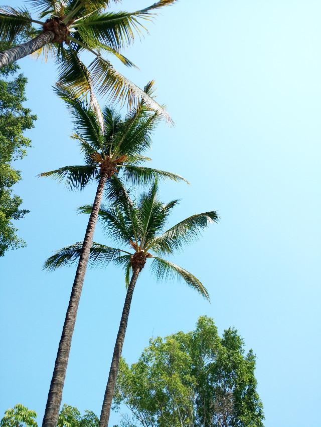 #palms #sky #trees