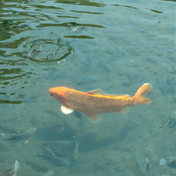 fish lake water