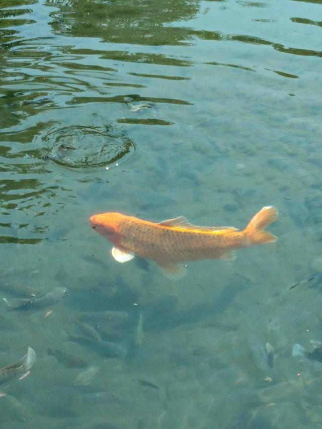 #fish #lake #water