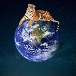 freetoedit planet tiger stars edit ircearthday