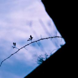 plant contrast backlight thorns black