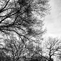 trees blackandwhite blackandwhitephotography photographer outdoorphotography