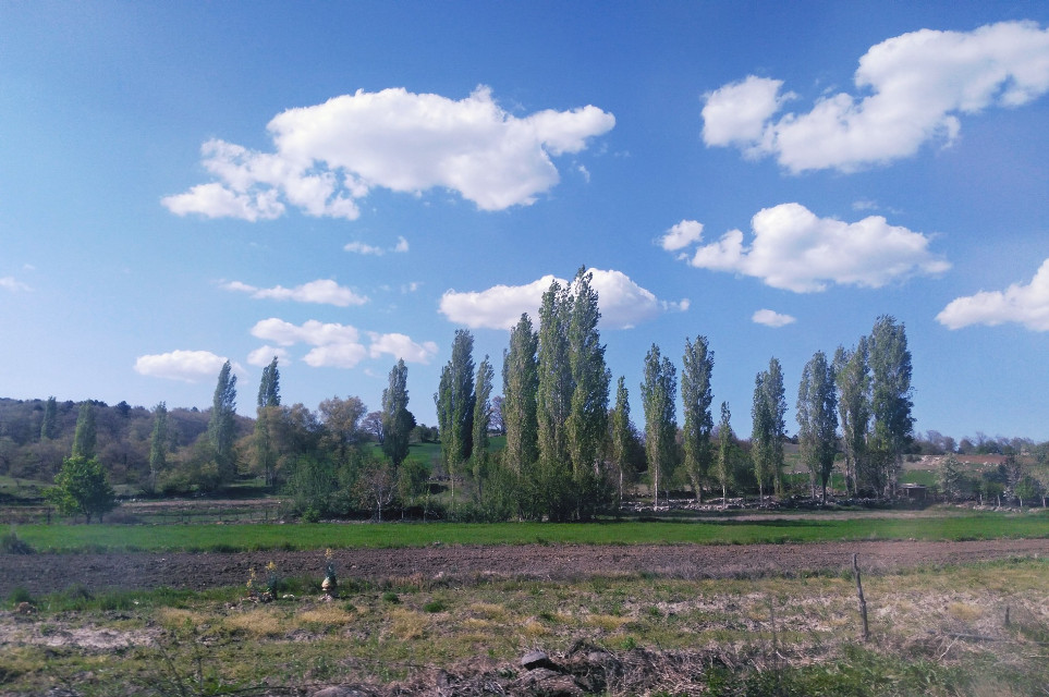 #nature #landscape #bluesky #trees