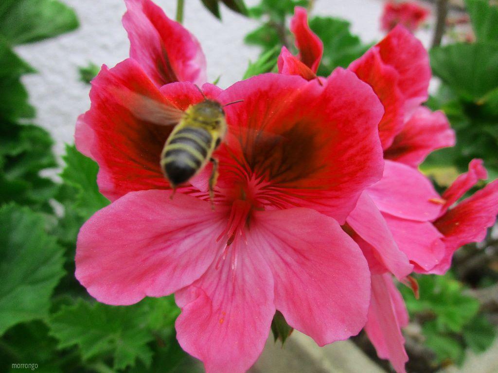 #freetoedit #flower #bee #insect #macro