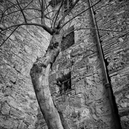 freetoedit blackandwhite monochrome tree italy