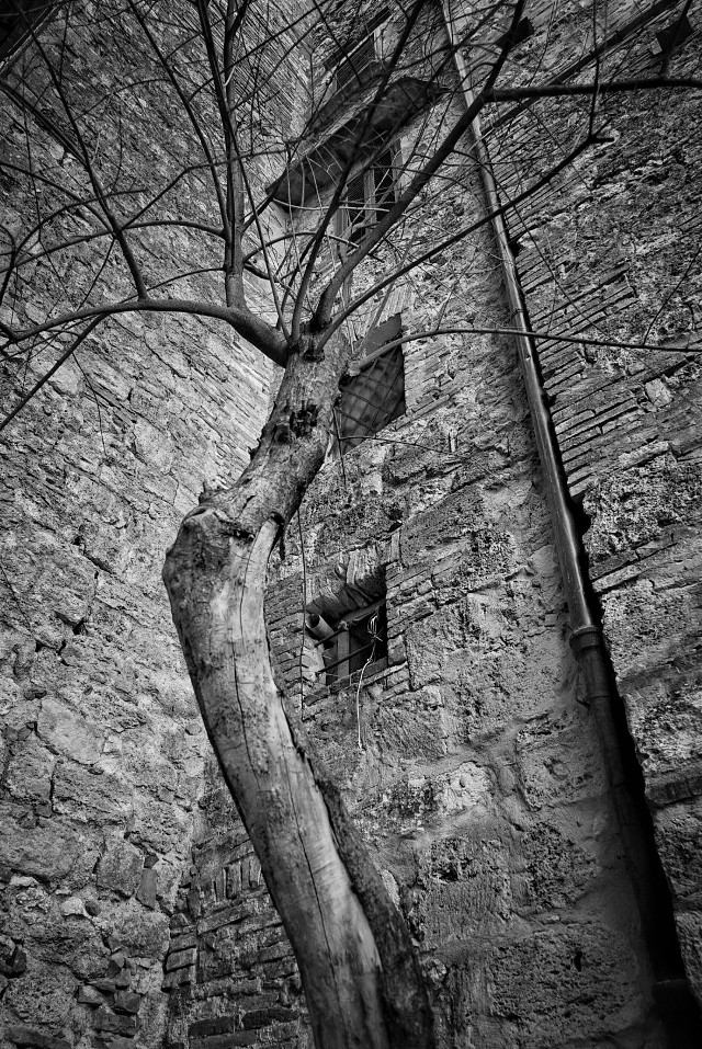 #freetoedit #blackandwhite #monochrome #tree #italy #tushar #city