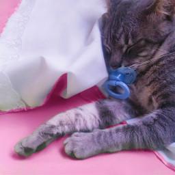 love cute cat cats catsofpicsart freetoedit pccutepets