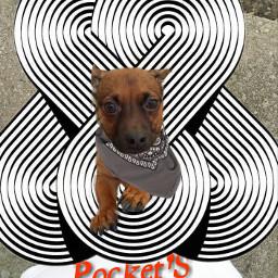 freetoedit dog pockets pet