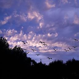 freetoedit srcblackbirds blackbirds