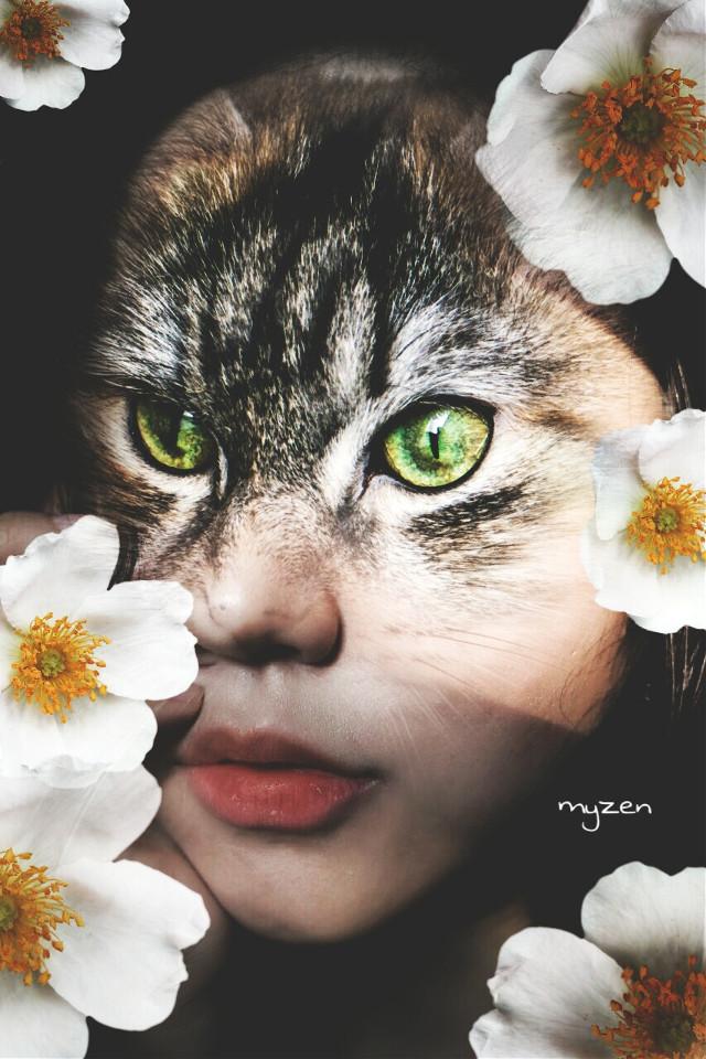 #freetoedit #cat #woman #surreal