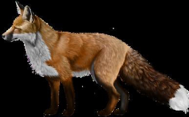 fox animal freetoedit