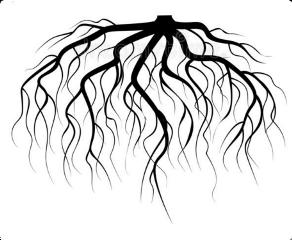 roots freetoedit