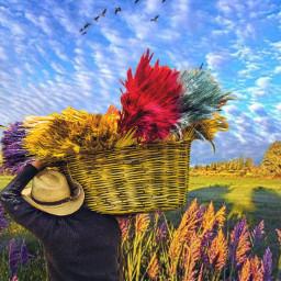 freetoedit irccolorfulbasket colorfulbasket