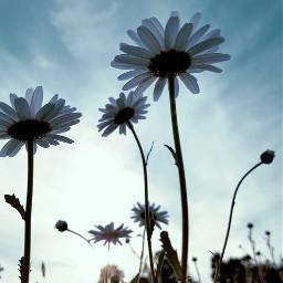 wildflower mother'sday nature retrofilter haveaniceday