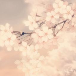 freetoedit cherrydream