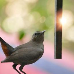 photography nature bird hello bird