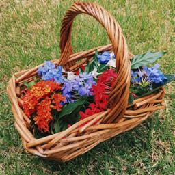 freetoedit flower colors colorfull jard