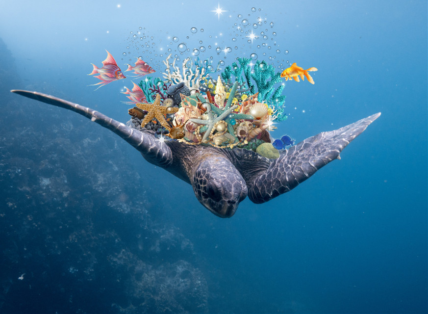 #freetoedit #remixit #turtle
