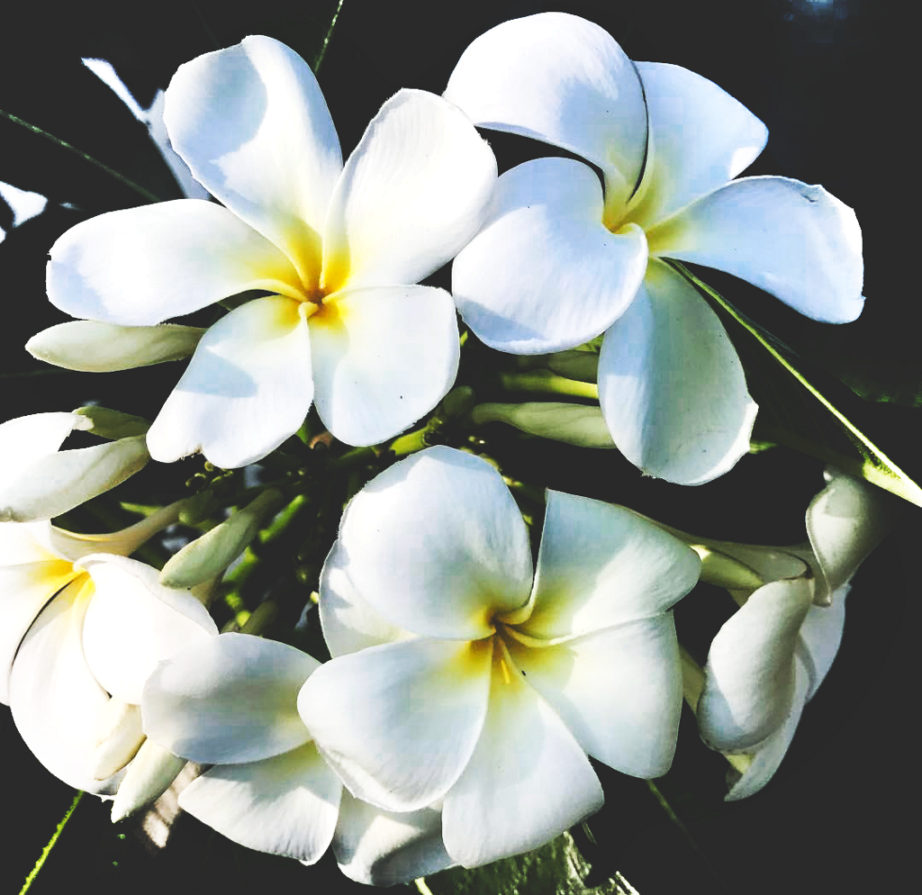 Good Morning Friends Pure White Flowers For You A