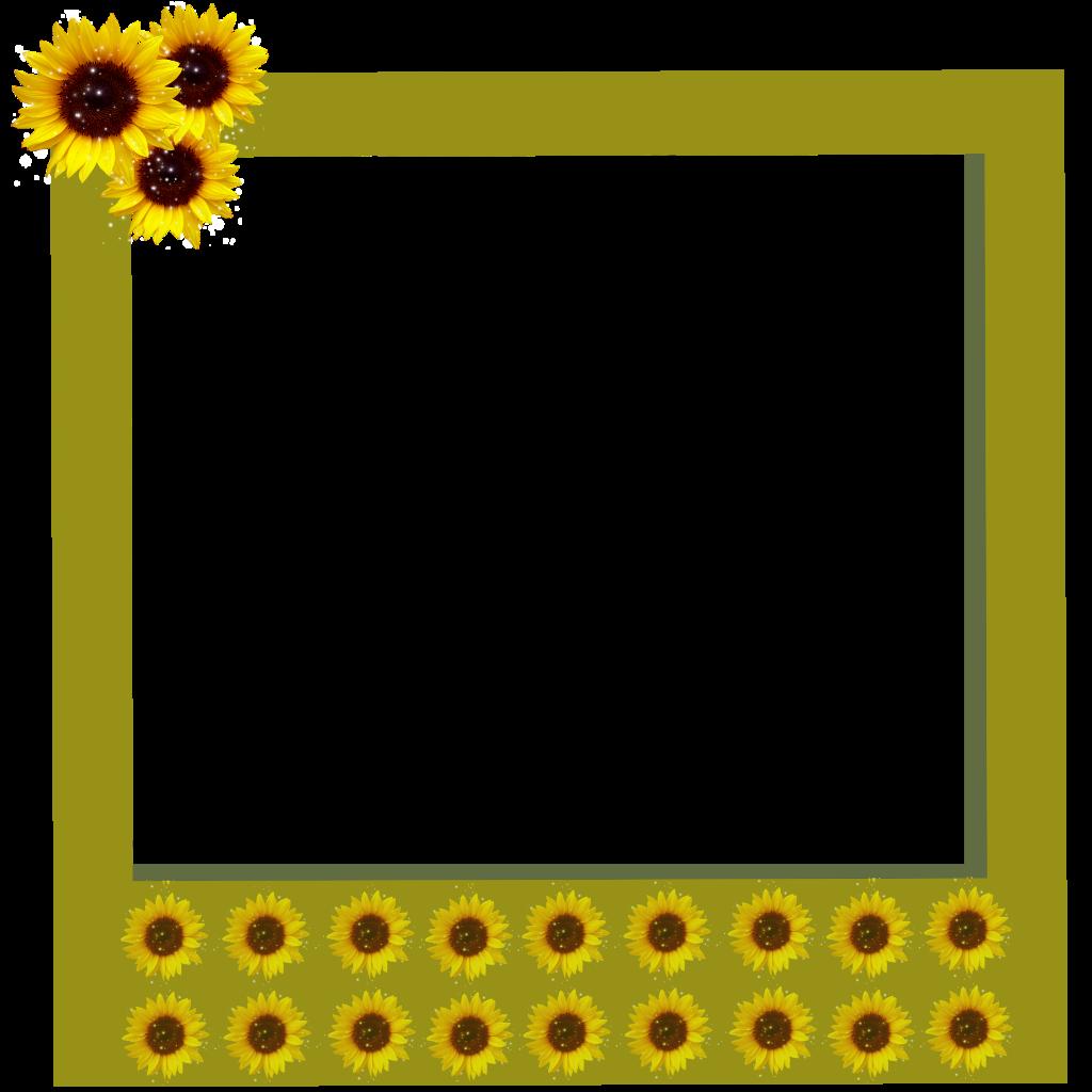tumblr aesthetic polaroid frame frames sunflowers sunfl...