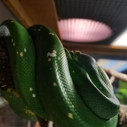 freetoedit snake scales slither myphoto