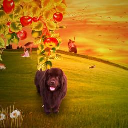 madewithpicsart newfoundlanddog newfoundland dogediting youtube