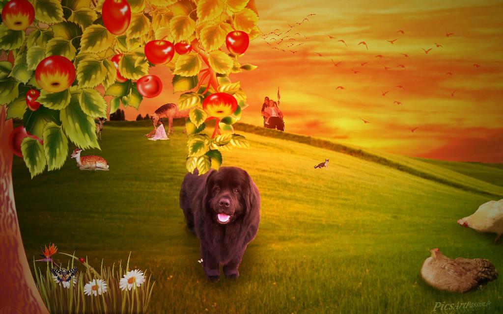 Fun Editing - Nico And The Chicken - #MadeWithPicsArt . Speed Art YouTube Video: https://youtu.be/DlSuVhVwrP8 . #newfoundlanddog #newfoundland #dogediting #youtube #speedart #dog #chicken #fun #fantasy #creativeedit