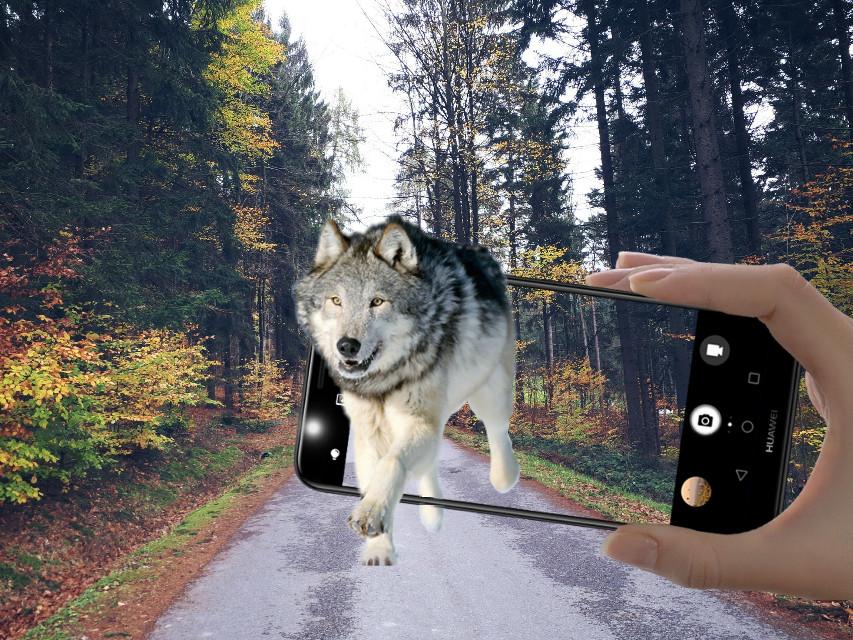 #wolf #phone