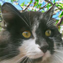 cat oreo meow tumblr green