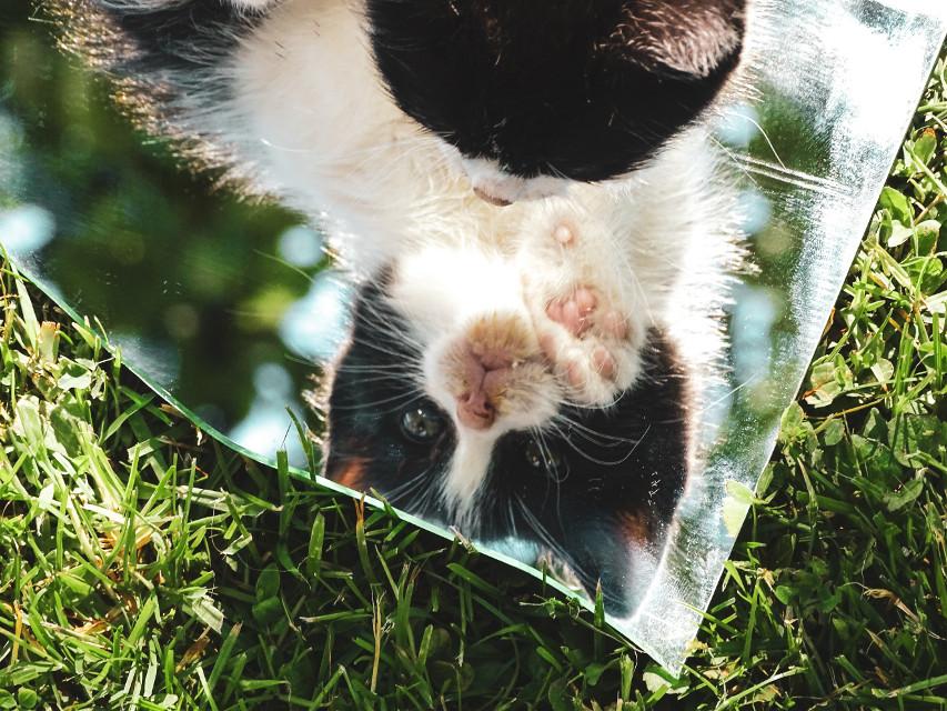 #freetoedit Hi 🐈 #cat #nature #mirror #sky #blue #green #photography #picsart #remix #pet #edit #summer @picsart @freetoedit