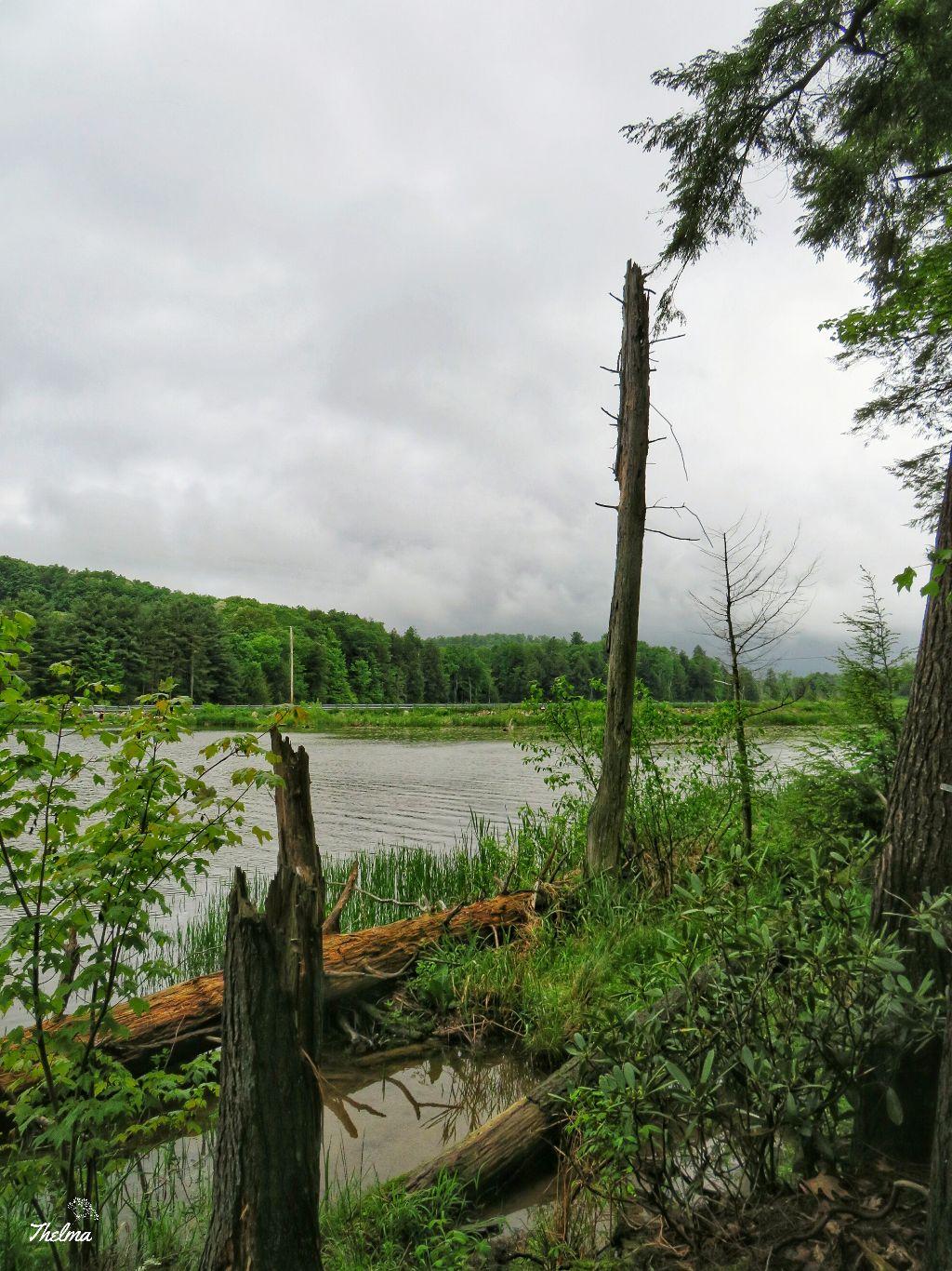 #swamp #dam #lake #moody