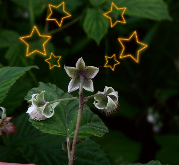 Just liked how this looked like a star#myview #stickers #star #plants #outandabout