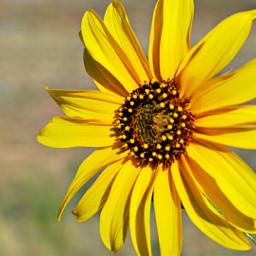 pcyellow yellow