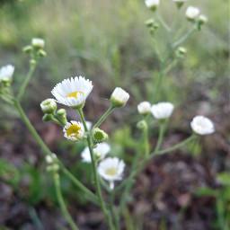 hdr wildflowers pretty softblur